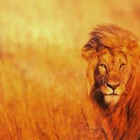 Аватар пользователя Lion_SLK